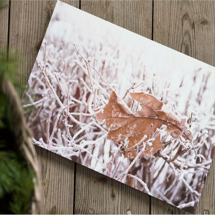 Winter feel on metal print.