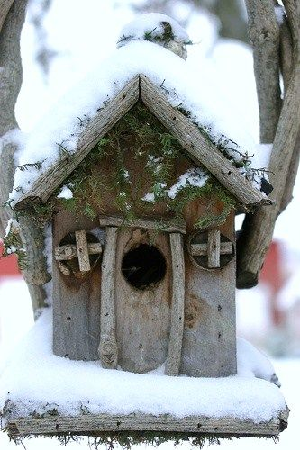 Snow covered bird house