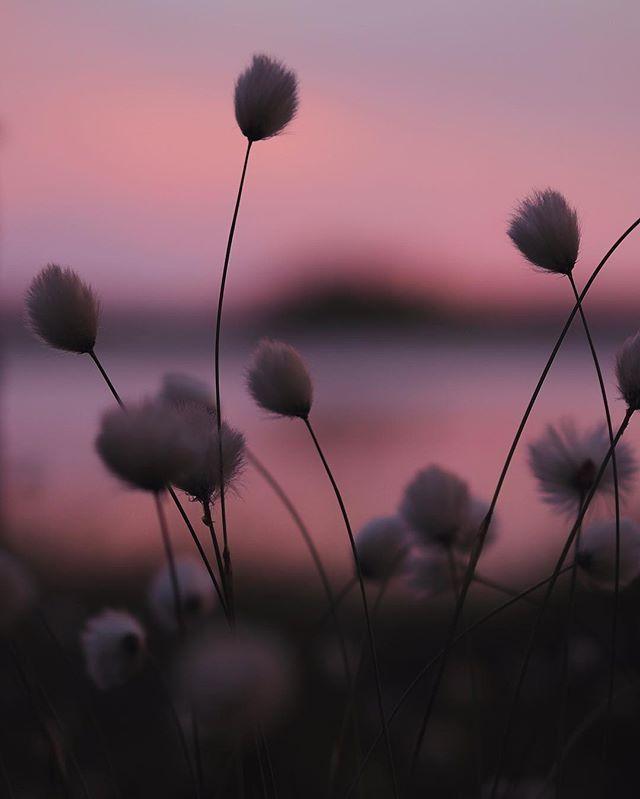 | solstice serenity |  #visitskellefteå @printler.se  #OlympusOMD @olympussverige