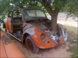 which came first  the tree or the vw