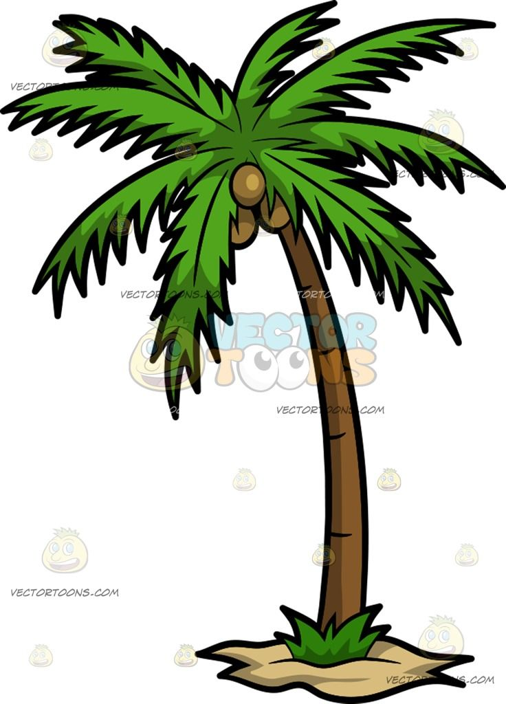 A Palm Tree With Coconuts Coconut Tree Drawing Palm Trees