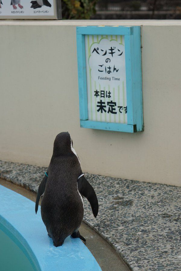 Poor penguin! The board says, 'Today's penguin's meal is undecided.'