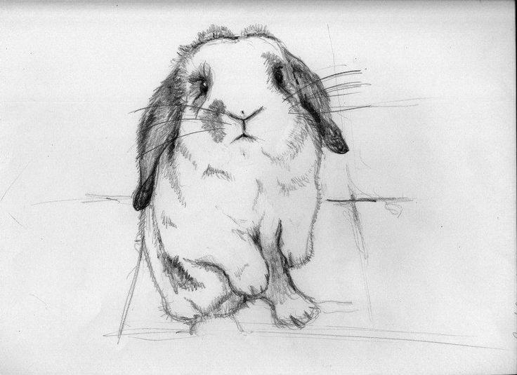 #conejo #bartolo #ilustraciones #lapices #milagalarreta #rabbit