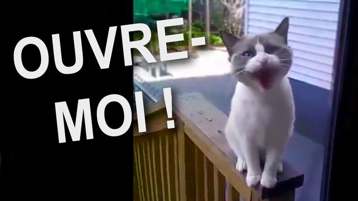 Ouvre moi humain !!!❤️❤️❤️😂😂😂