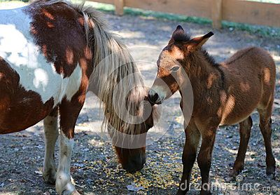 Pony with cubs at shade in paddock.
