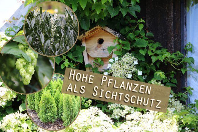 Garten Sichtschutz Pflanzen