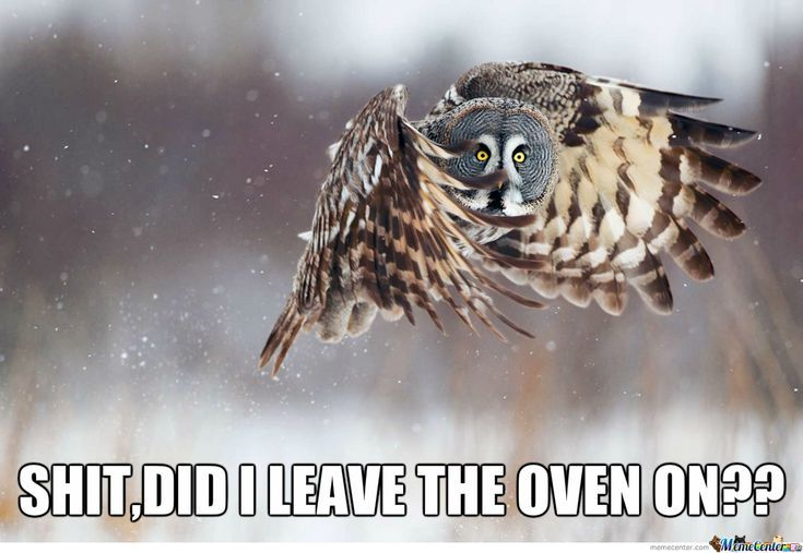 These Adorably Sinister Owls Give Cat Memes A Run For Their Money Great Grey Owl Owl Bird Pet Birds