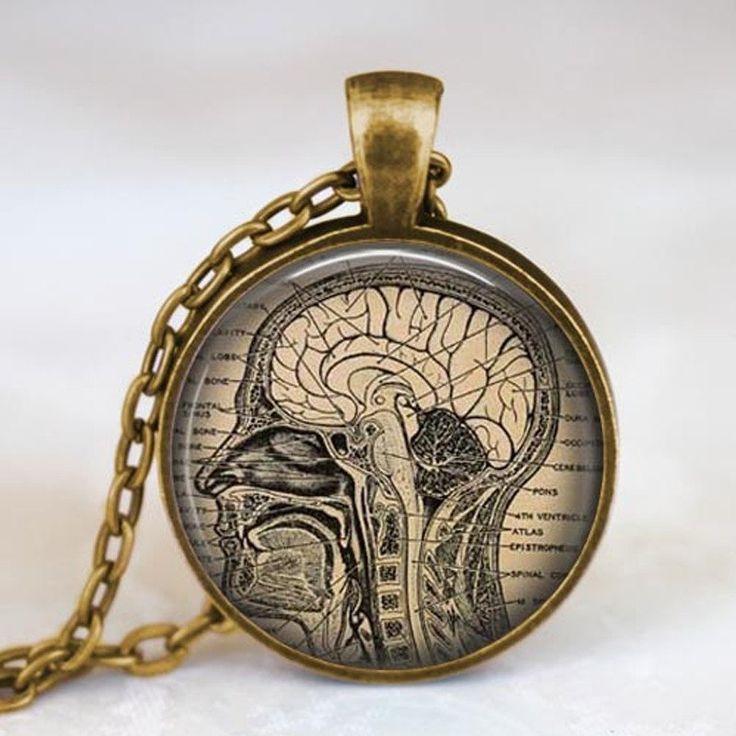 1000  ideas about brain anatomy on pinterest