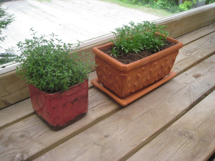 Thyme and coriander
