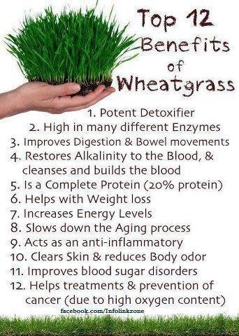 Experts recommend drinking 1 to 4 ounces of fresh wheatgrass juice daily. - Clean, Lean and Healthy