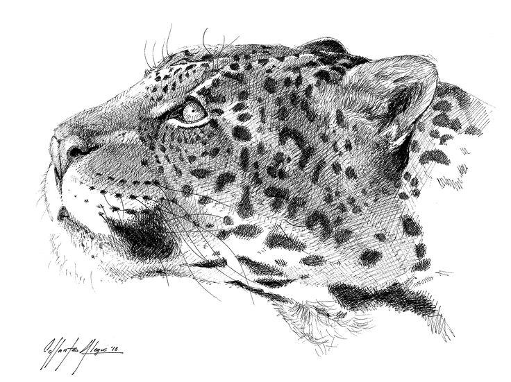 Texto e ilustración realizados por Mariano Collantes El Yaguareté (Panther onca) es un gran felino de América. Es muy parecido al leopardo, pero de mayor tamaño (puede alcanzar 130kg de peso). A ex…