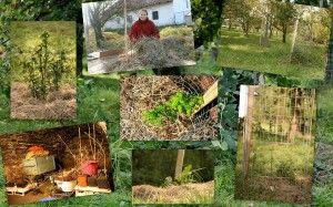Výsadba keřů a stromů. Permadesign | Design přírodních zahrad