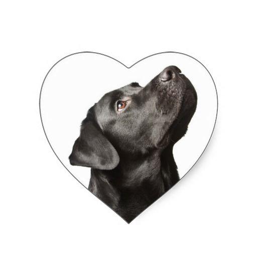 Love Black Labrador Retriever Heart Stickers ...  http://www.zazzle.com/love_black_labrador_retriever_heart_sticker_label-217676164576234195