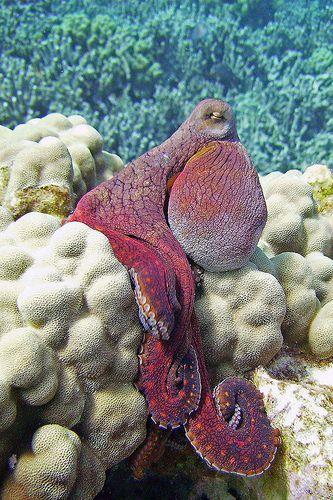 soft intelligence -- Day Octopus
