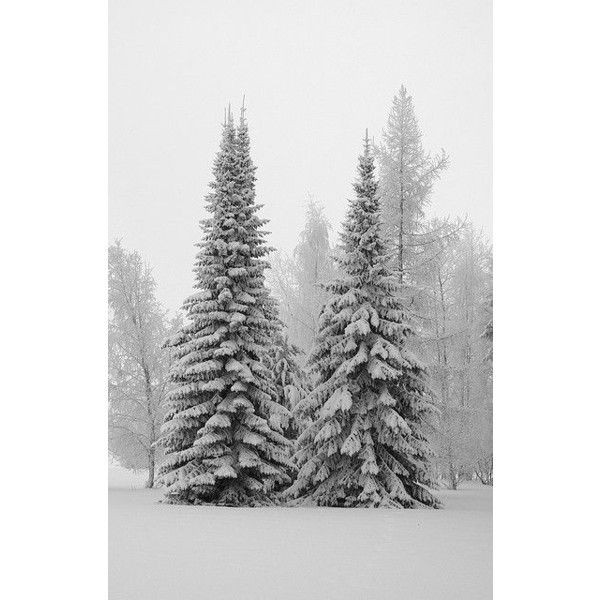 Real Xmas Trees 01 ❤ liked on Polyvore featuring home, home decor and winter