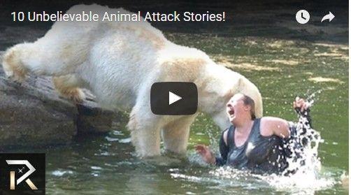 Beautifulplace4travel: 10 Unbelievable Animal Attack Stories!
