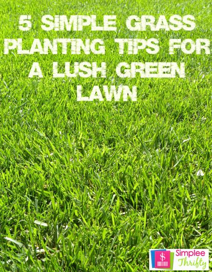 5 simple grass planting tips for a lush green lawn! #summer #tips