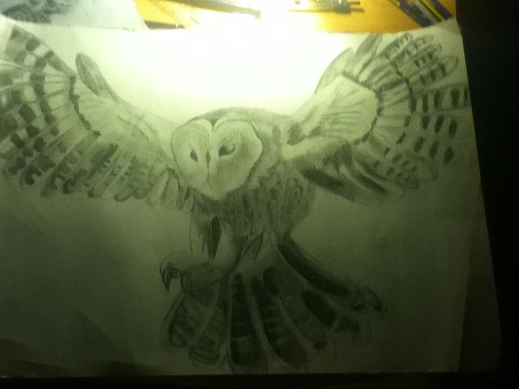 My finished flying owl drawing