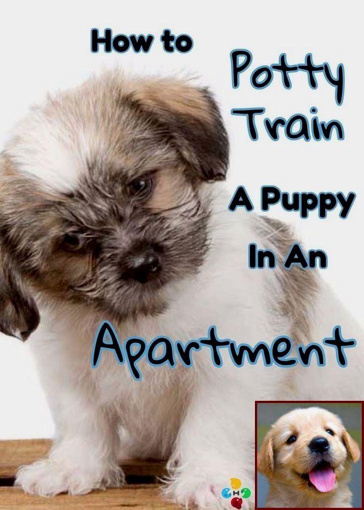 Dog Behavior Specialist Vancouver And Dog Behavior Guarding Owner