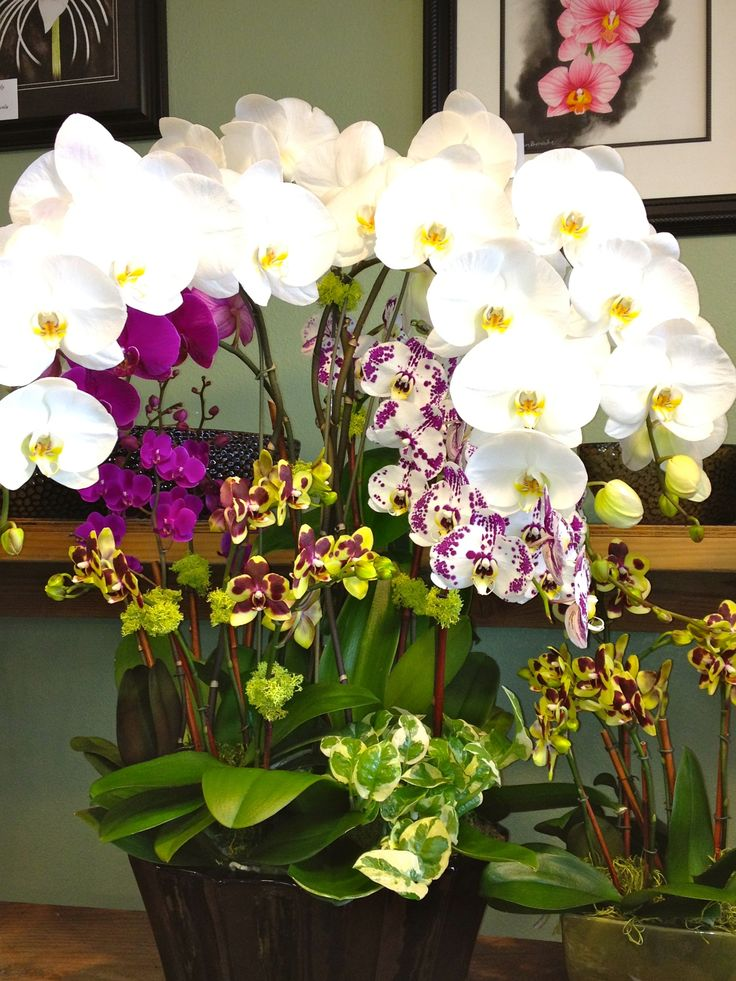 How To Take Care Of Orchids Healthy And Holistic regarding How To Care For A Orchid How To Care For A Orchid | AMENagement-lego.com