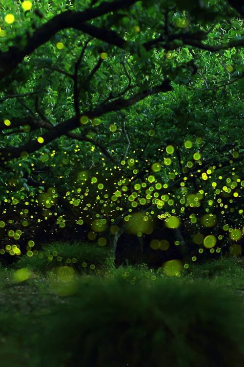 Japanese photographer Yume Cyan captured this gorgeous long-exposure photo of twinkling fireflies in the forest near Nagoya, Japan, titled the Last Dance of the Fairies.