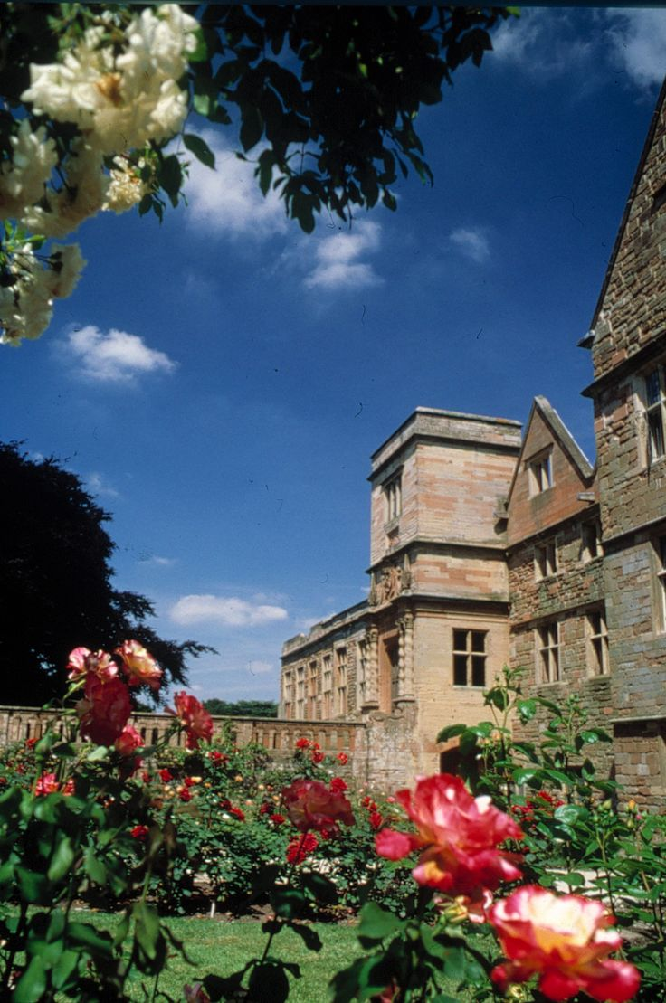 Beautiful roses in bloom at Rufford Abbey