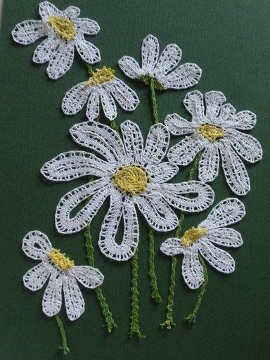 fresh beautiful daisies