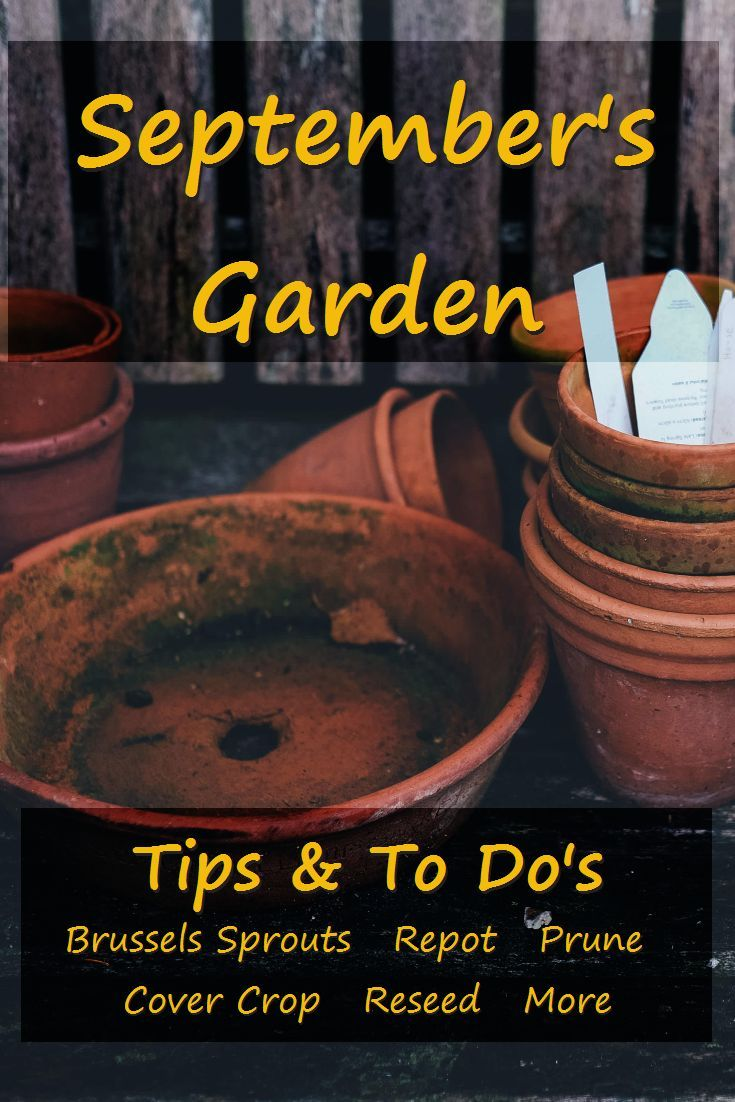 September gardening lists are long. There's as much to do now as there was in at the height of spring planting and summer harvesting. The work you do in the garden this month helps insure a productive garden next year. via @RobinFollette