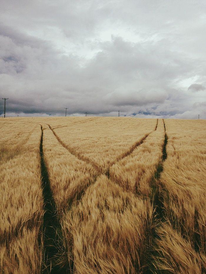 campo y huellas