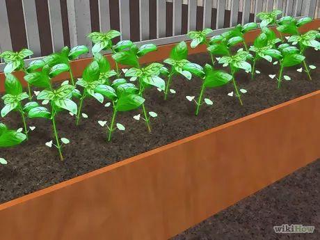 Imagem intitulada Build Raised Vegetable Garden Boxes Step 8