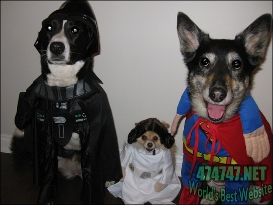 What's Your Caption to This Picture? Thanks for Sharing Your Thoughts in Advance: Funny Funny, Animal Lovers, Halloween Costumes, Funny Shit, Poor Animal Hahahahhahaha, Halloween Everyone, Happy Dogs O' Ween, Starwars, Happy Halloween