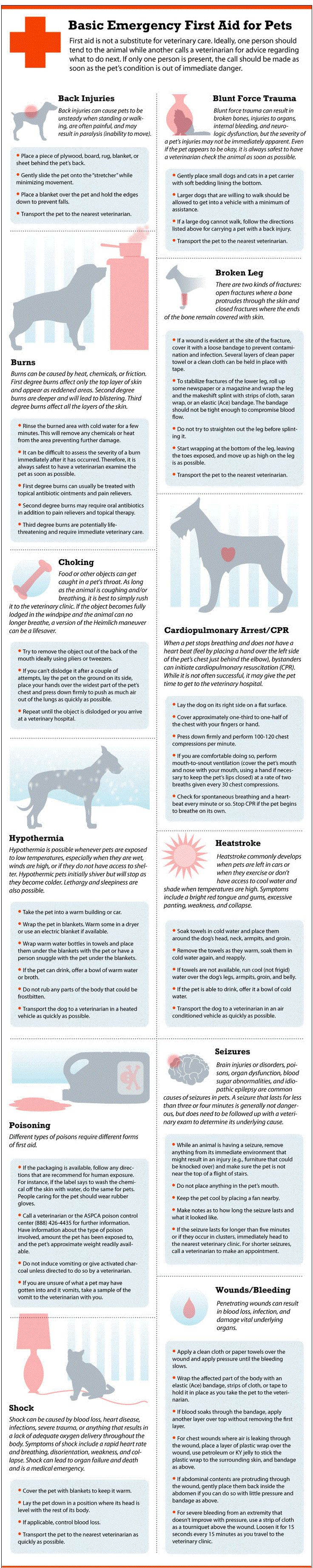 Basic emergency first aid for pets