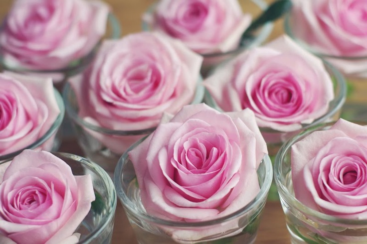 Simple Lovely Pink Roses <3