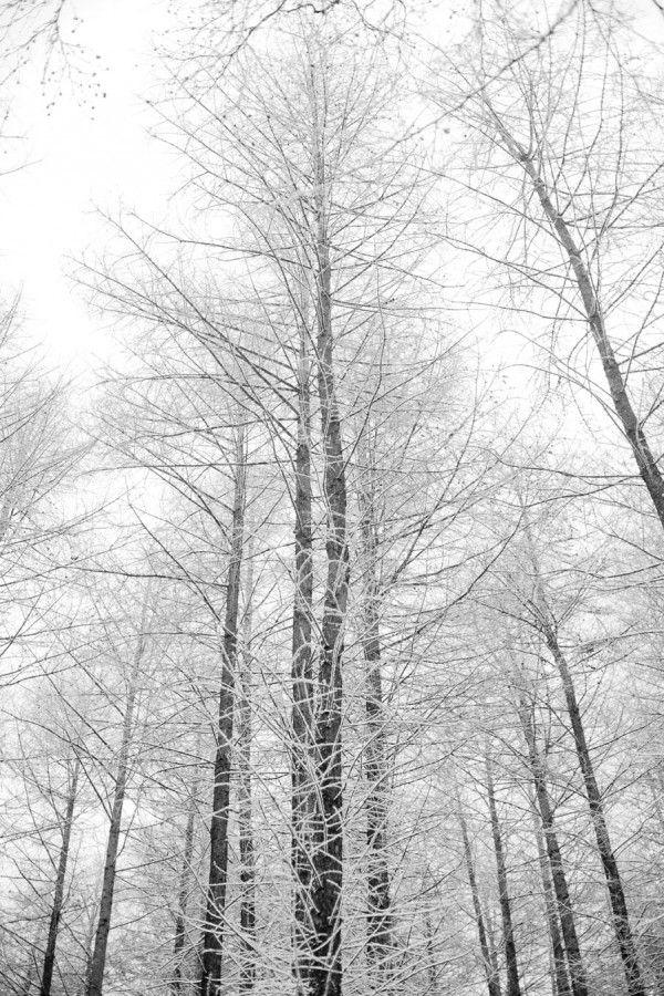 Primordial Force by Jens Ole Ambjerg: Natural Picturesqu, Winter Trees, Winter White, Primordi Force, Winter Wonderland, Jen Ole, Wood Wood, Nordic Feelings, Ole Ambjerg