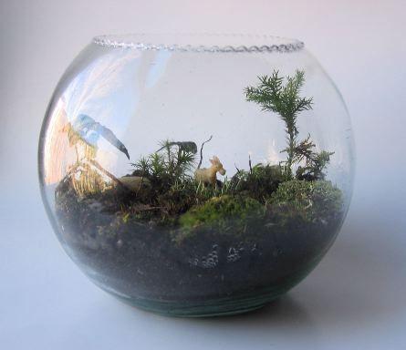 Victorian fishbowl donkey terrarium