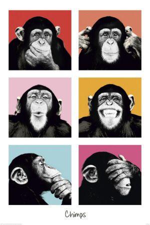 """As coisas simplesmente são...  Como devem ser.  Vc decide como as vê.    """"The Chimp-Pop poster"""""""