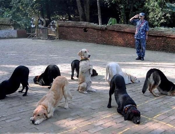 Group class   http://deltak9.com/protection-dogs/