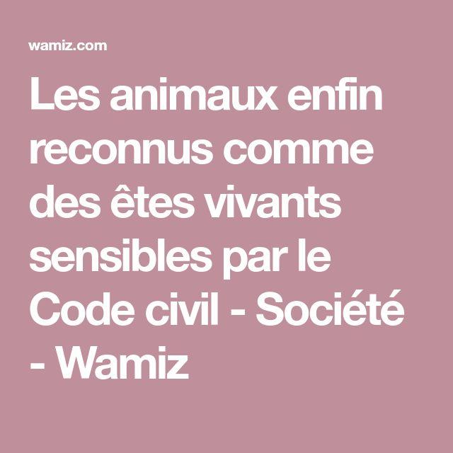 Les animaux enfin reconnus comme des êtes vivants sensibles par le Code civil - Société - Wamiz