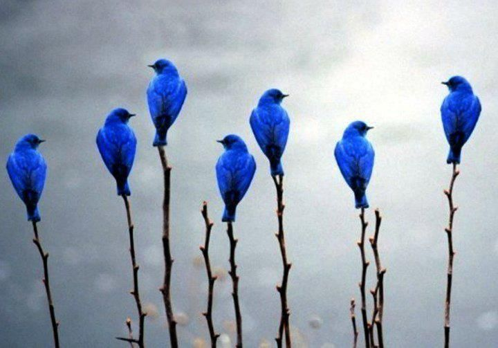 Talk about the Bluebird of happiness! :-)