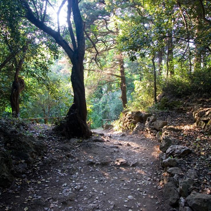Potami Forrest Samos
