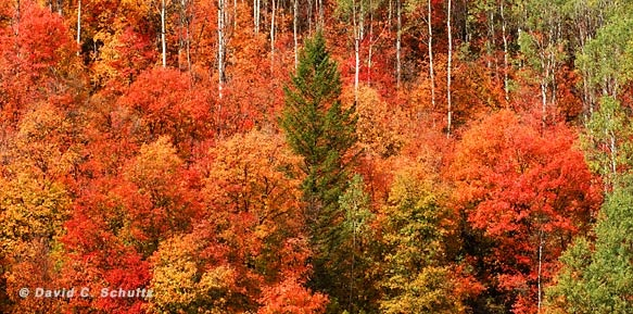 Autumn nature and landscape photographs at West Light Images in Park City Utah by David Schultz.Lights, Aspen Trees, Favorite Time, Fall Mi Favorite, Autumn Nature, Parks Cities Utah, David Schultz, Landscapes Photographers, Autumn Colors