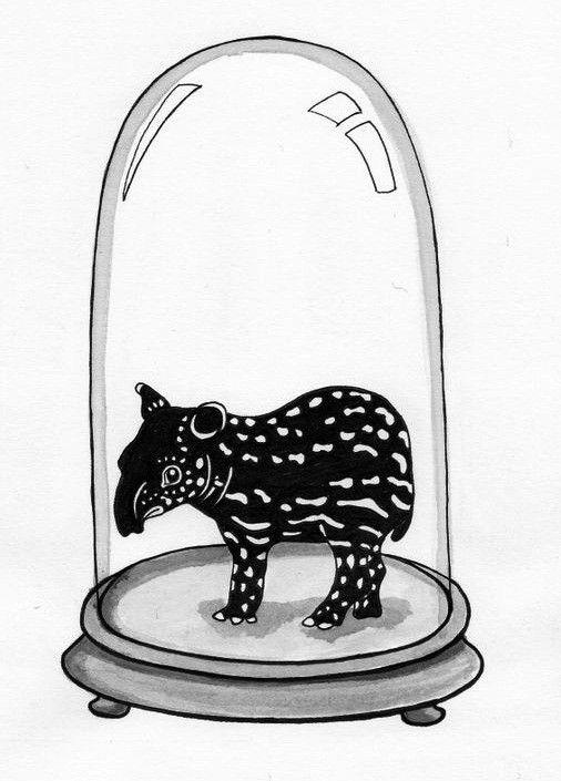 Kunst plakat // Limited edition art print // 'Baby Tapir'
