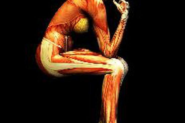Función del sistema muscular   Muy Fitness