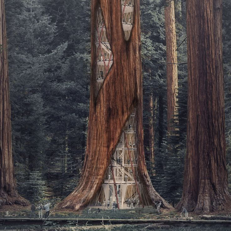 A conceptual scheme by a team of South Korean designers calls for inserting towers within the hollowed-out trunks of giant sequoias in the western US.