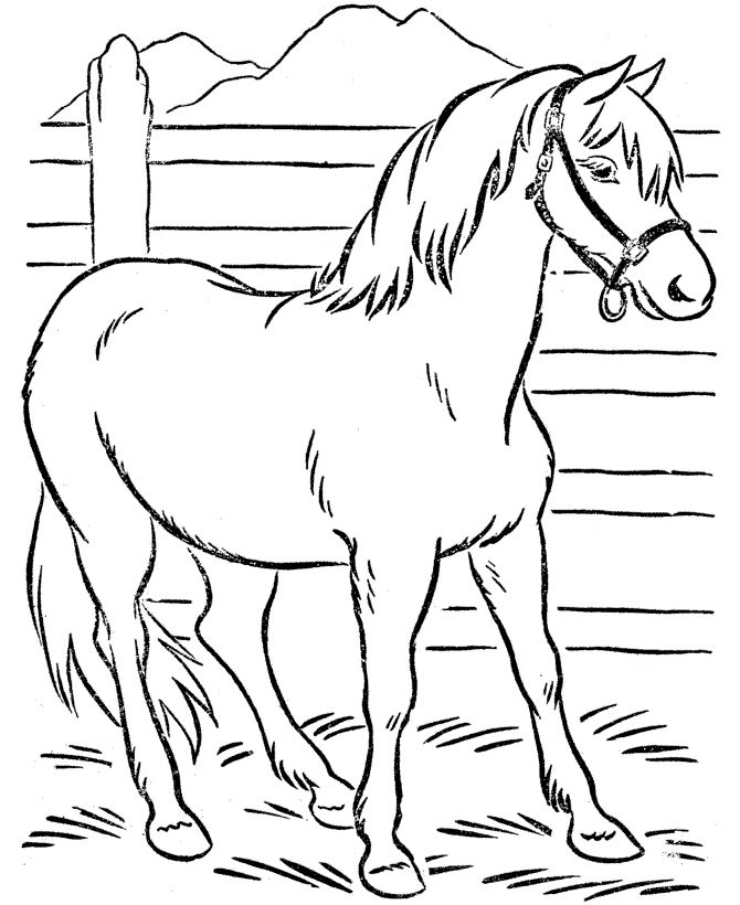 Horse Little Duck Umbrellas Colouring Pages For Kids Horse And Duck Coloring Pages