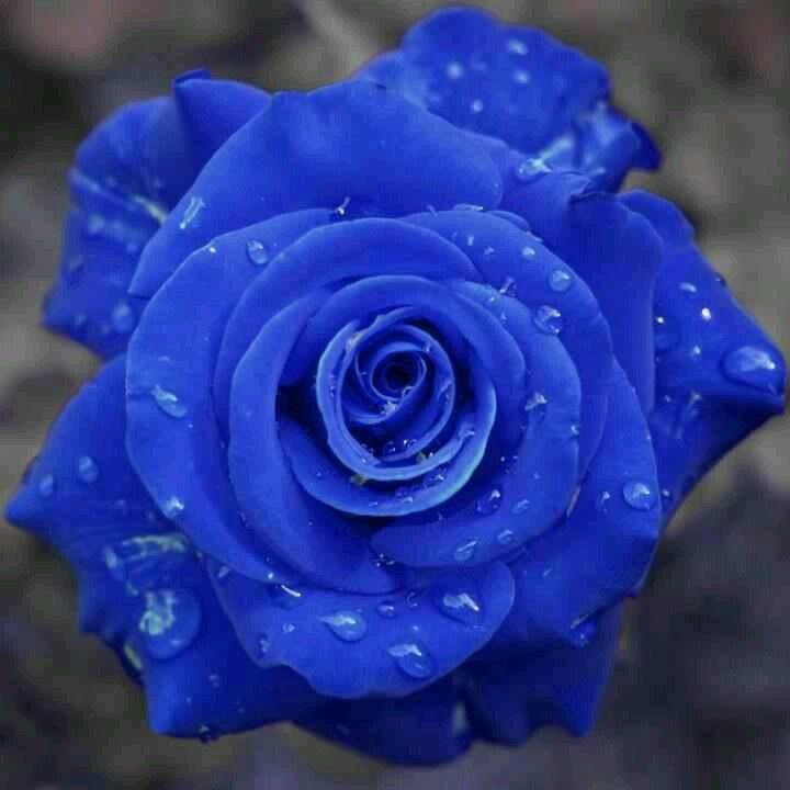 .......rose.....................blu