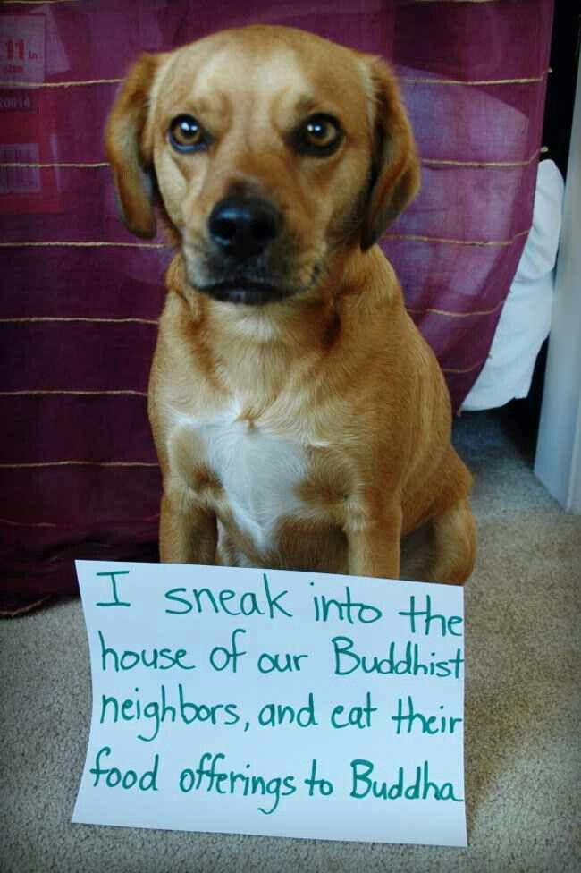 Um... Don't Buddhists believe in reincarnation? Are you sure that's just a dog?
