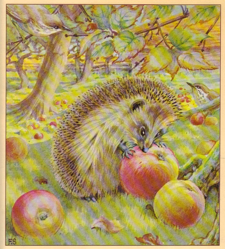 """""""The Hedgehog Feast"""" by Edith Holden (https://www.etsy.com/listing/170178509/the-hedgehog-feast-by-edith-holden?ref=related-1)"""