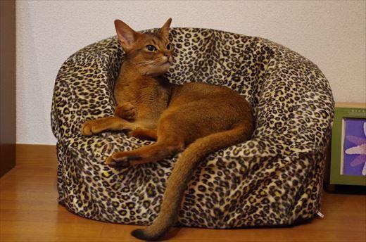 A cat in the sofa.