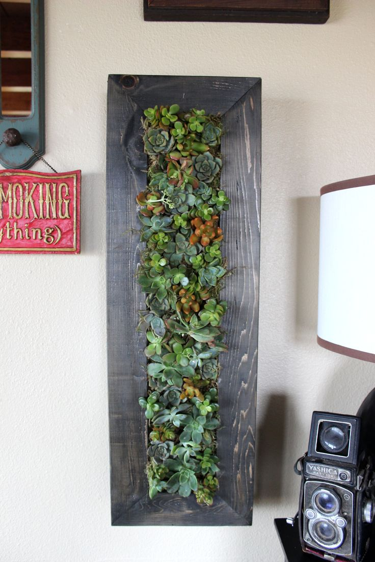 11 Best Green Thumb Plants Flowers Images On Pinterest
